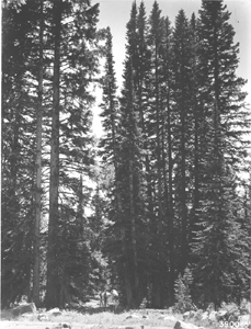 Forest History Page photo 4