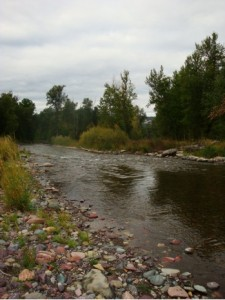 Photo of a section of the Jocko River that is the currently being restored. Photo by author