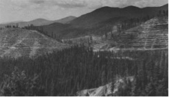 Bitterroot National Forest Clearcuts and Terraces, from http://www.foresthistory.org/ASPNET/Publications/region/1/history/chap12.htm