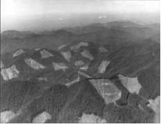 National Forest Service Clearcuts, Olympic National Forests, 1957 from here. http://www.foresthistory.org/ASPNET/Publications/first_century/sec8.htm