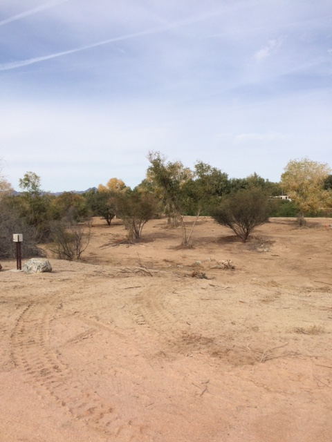 Newly planted trees and shrubs in the West Wetlands Park