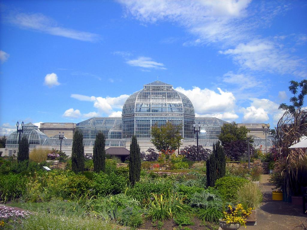Superbe IMG5. U.S. Botanic Garden.