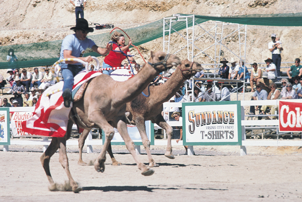 camel-race