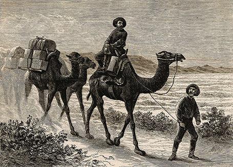camels-california